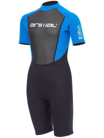 Animal Nova 3/2 Back Zip Shorty Wetsuit Boys